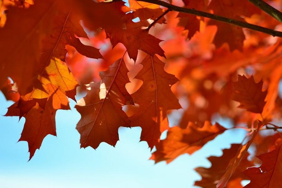 Jesienna promocja kosmetyczna ELL